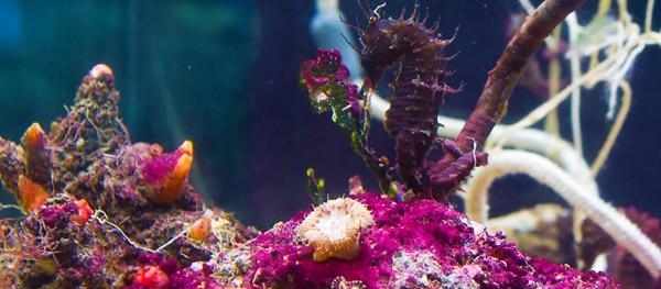 Aquarium Pula