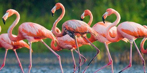 10 leukste natuurparken en dierentuinen in Frankrijk
