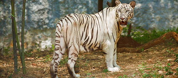Safaripark Pombia