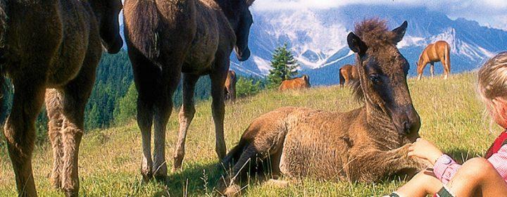 10 leukste natuurparken en dierentuinen in Italië