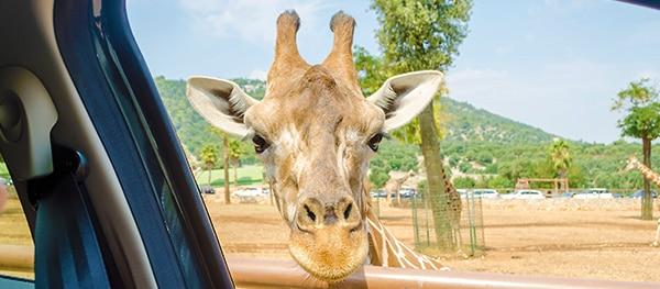 Parco Natura Viva in Bussolengo