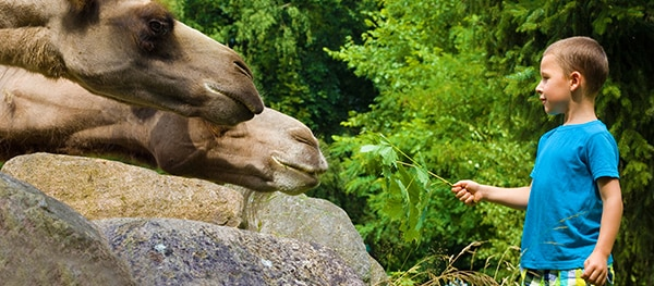 Best Zoo Best