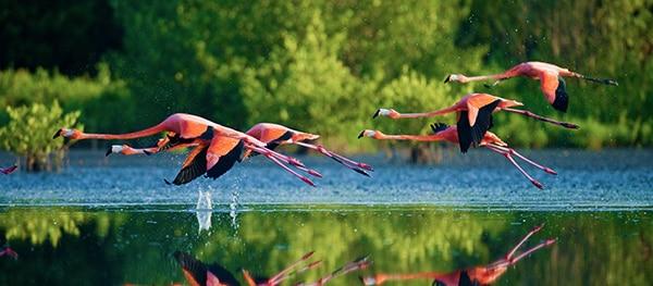 Cagliari flamingos
