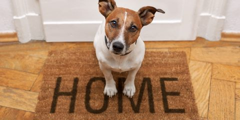 Kamperen zonder je hond