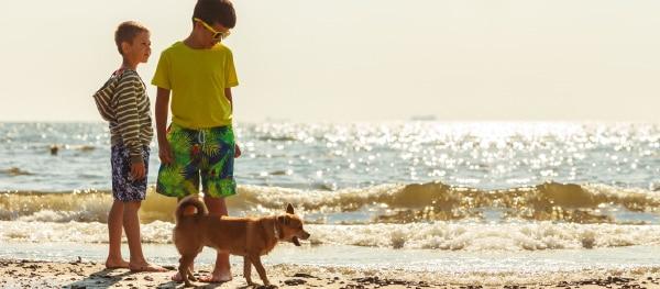 Strandwandelingen met je hond