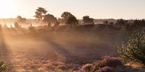 6 redenen om te kamperen in Nederland in plaats van ver weg