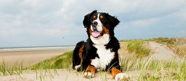 Kamperen met je hond