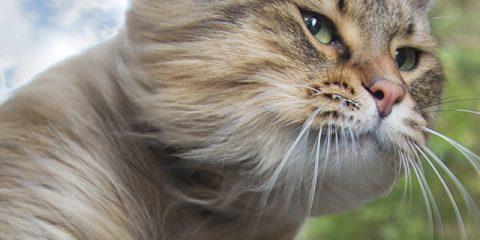 In acht stappen kamperen met je kat