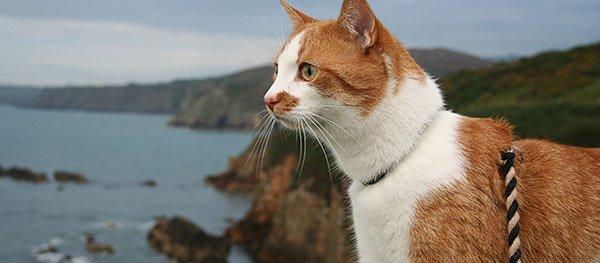 Kamperen met je kat