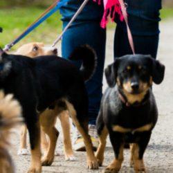 uitlaatservice honden