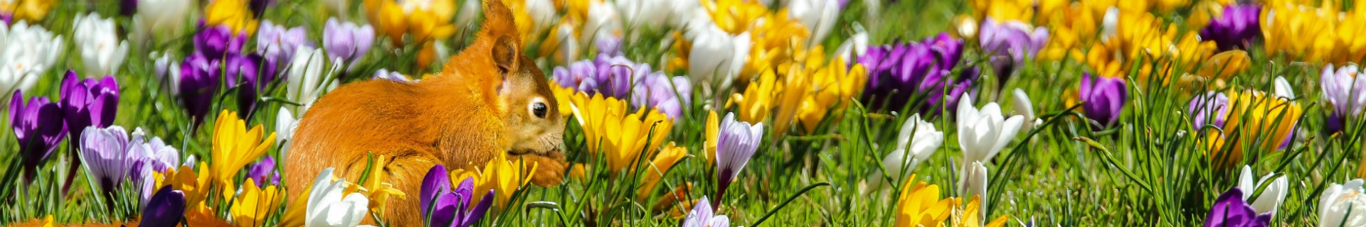 Wat Te Doen Met Pasen Suncamp Holidays Blog De Leukste