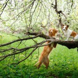 Kamperen met hond
