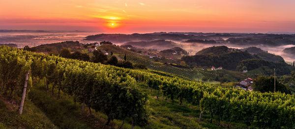 Wijnstreek in Podravje