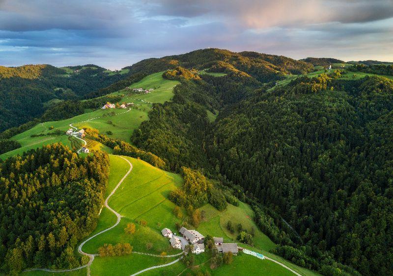 De bossen van Slovenië.