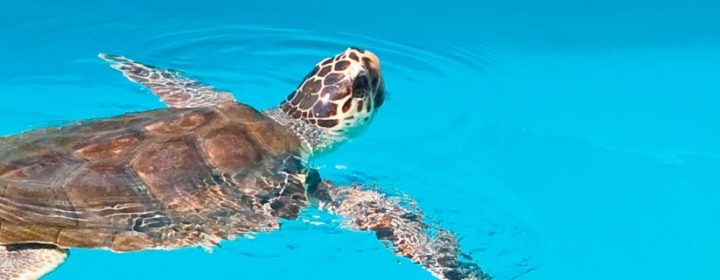 Snorkelen, safari en duiken: ontdek de bijzondere dieren van Kroatië
