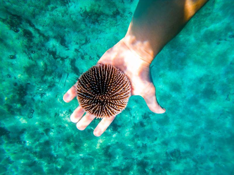 Kroatië snorkelen