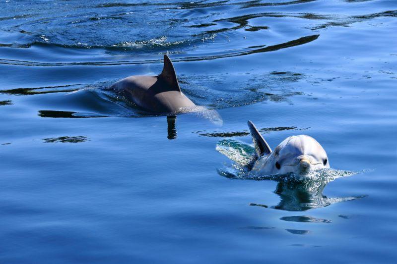 Dolfijnen Kroatië