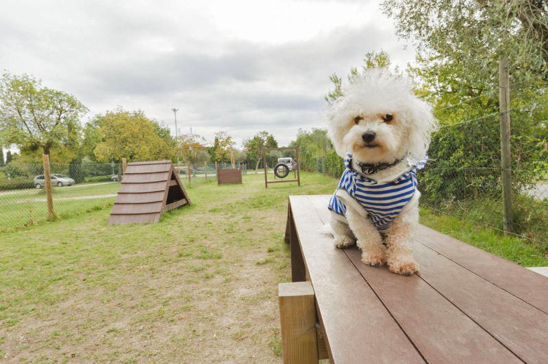 Honden camping